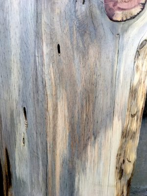 Blue Stain Pine Wood Slab 27 Quot X 15 1 2 Quot X 2 Quot Kiln Dried Live Edge Wood Reclaimed Wood