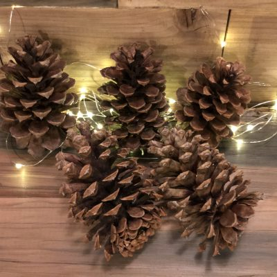 100% Natural Kiln Dried Pinecones